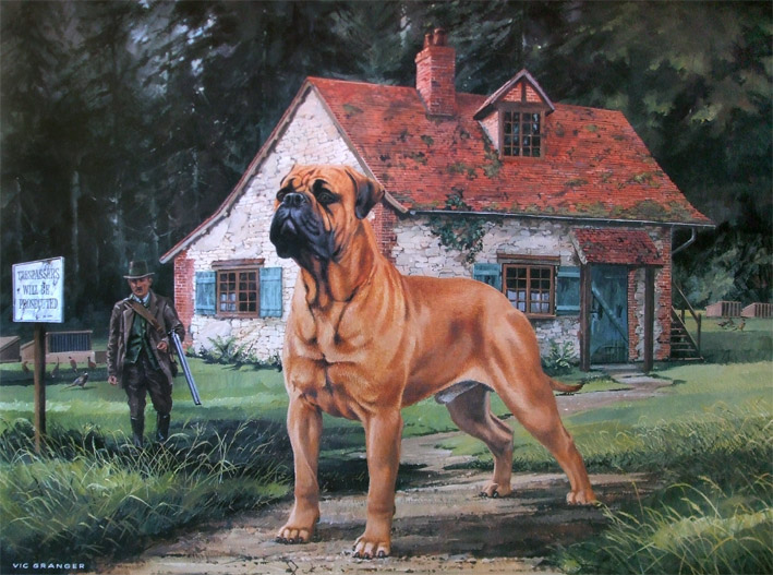 bullmastiff limited edition print by canine artist vic granger