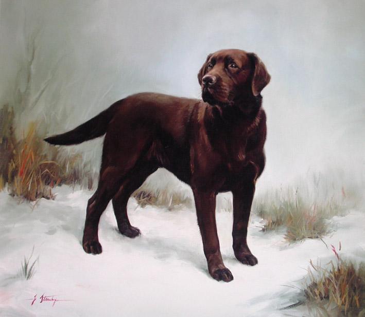 Stanhope%20 %20Chocolate%20Labrador%20L - En sevdiğiniz köpek cinsi nedir?