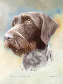german wirehaired terrier fox terrier prints dog paintings limited edition prints 509