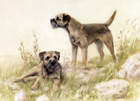 Border Terrier Prints Dog Paintings Limited Edition